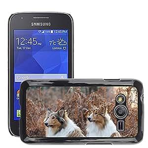 Cas Coq Case Cover // M00147744 Collie Perros Par Atención Bosque // Samsung Galaxy Ace4 / Galaxy Ace 4 LTE / SM-G313F