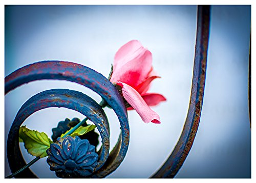 Card Silk Art (New Orleans Silk Rose Fine Art Greeting Card (Blank Inside))