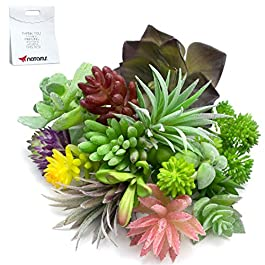 Artificial Succulent Plants Faux Assorted –...
