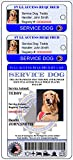 Holographic Service Dog ID + 2 Key Tags | Includes Registration to National Dog Registry