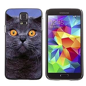 Be Good Phone Accessory // Dura Cáscara cubierta Protectora Caso Carcasa Funda de Protección para Samsung Galaxy S5 SM-G900 // Siberian Blue British Shorthair Cat