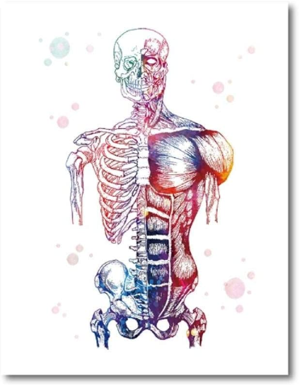 muscles skeletal muscles watercolor anatomy art human muscles man body Muscular System muscular man muscles human body medical art