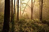 Wallmonkeys Spring Woods at Dawn Peel and Stick Wall Decals WM337792 (60 in W x 40 in H)