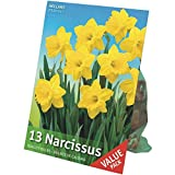TotalGreen 72415100 Daffodil Bulbs