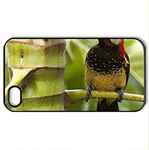 bird - Case Cover for iPhone 4 and 4s (Birds Series, Watercolor style, Black)