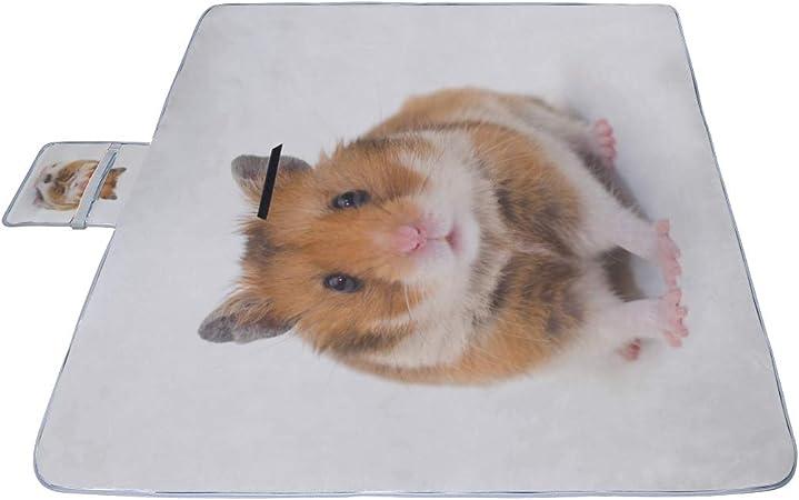 hamster plage