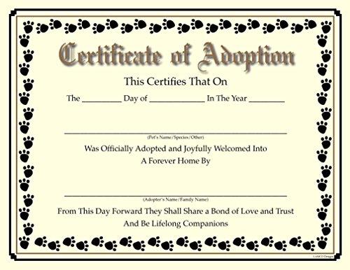 Pets Adoption In Brazil Animals Shelter Oc2o
