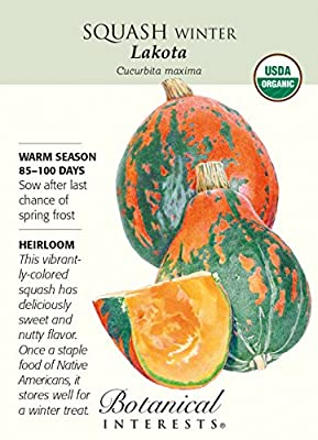 Organic Lakota Winter Squash Seeds - 2 grams - Botanical Interests