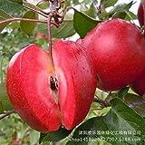 Mela mela rossa frutta amore carne rossa, alberi da frutto in vaso possono essere piantati alberi da frutto 50 Semi / Batterie
