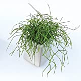 Off The Wall Planter – Large – White For Sale