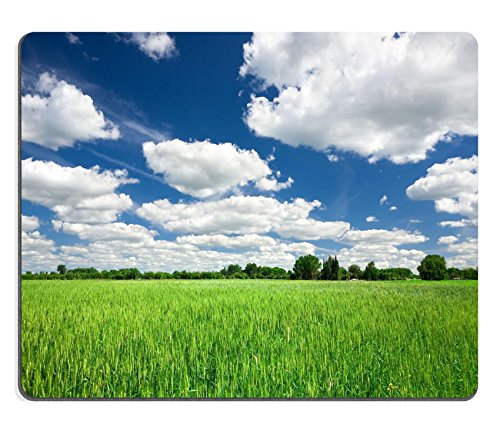 msd-mousepad-image-id-19364438-green-wheat-field-on-blue-sky-background