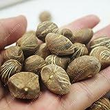 1 seed/bag pachira macrocarpa,pachira seeds,pachira aquatica,bonsai tree seeds,potted flower seeds money tree home garden plant