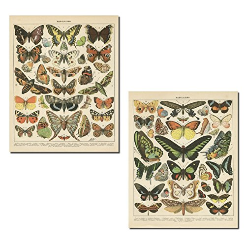Gango Home Dcor Popular Vintage French Types of Papillons Butterflies Set; Two 11x14in Paper Print Posters