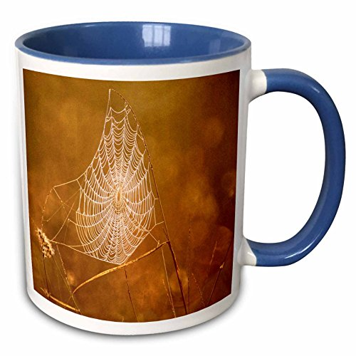 3dRose Danita Delimont - Spiders - Texas, Rio Grande Valley, Spider web (Spider Valley Plate)
