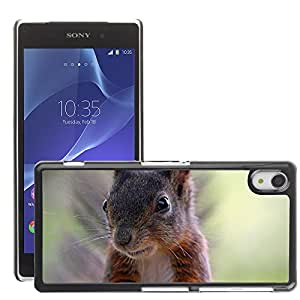 Hot Style Cell Phone PC Hard Case Cover // M00114913 Squirrel Nature Animals Cute Nager // Sony Xepria Z2 L50W