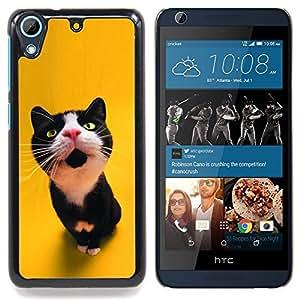 """Gato curioso lindo"""" - Metal de aluminio y de plástico duro Caja del teléfono - Negro - HTC Desire 626 626w 626d 626g 626G dual sim"""