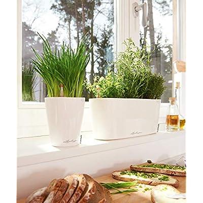 Lechuza 15460 Delta 10 Self-Watering Garden Planter for Indoor and Outdoor Use, 30cm, White High Gloss : Garden & Outdoor
