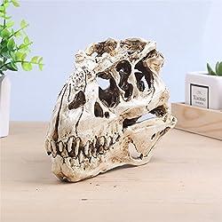 Tyrannosaurus SCALE RESIN DINOSAUR SKULL MODEL COLLECTIBLE K0111