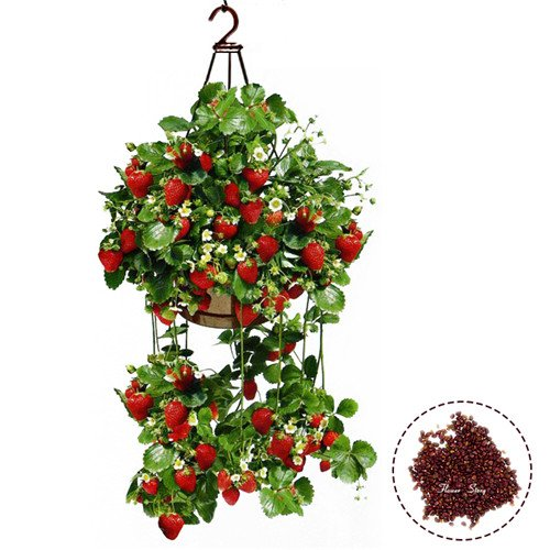 Best Selling! 200 Planting Hanging Strawberry Seeds semenatsvety garden bonsail Fruit Delicious