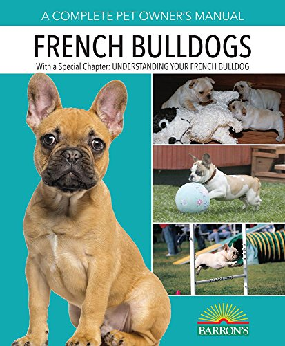 french bulldog for sale - 6