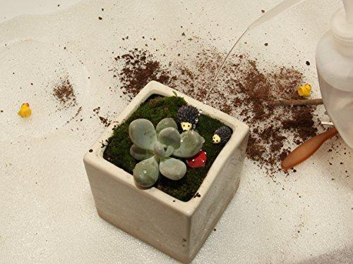 Ginsco 7pcs Succulent Transplanting Miniature Fairy Garden Planting Gardening Hand Tools Set