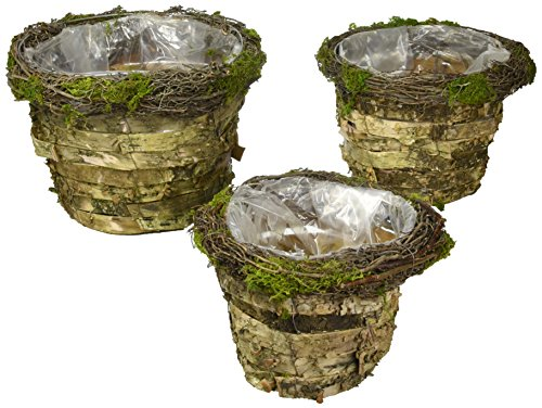 Burton & Burton Pot Cover Birch Bark & Moss Nested Set Of 3