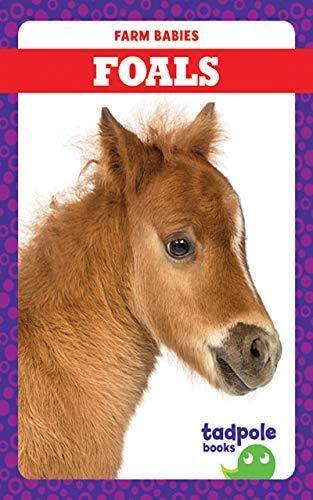 Baby Foal - 6