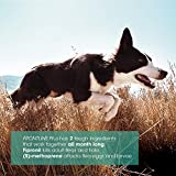 FRONTLINE Plus Flea and Tick Treatment for Dogs