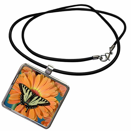 3drose-danita-delimont-butterfly-canadian-tiger-swallowtail-butterfly-papilio-canadensis-01-necklace