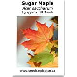 Sugar Maple (Acer saccharum) 1g approx. 18 Seeds. 5g, 25g quantity options (1g approx.18 Seeds)