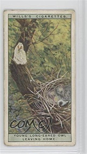 (Young Long-Eared Owl Leaving Home Ungraded COMC Good to VG-EX (Trading Card) 1925 Wills Life in the Tree Tops - Tobacco [Base] #38)