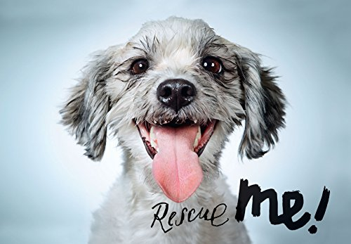 Rescue Me: Dog Adoption Portraits and Stories from New York - Uk Preloved Dogs Pets