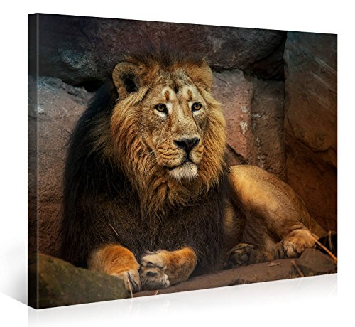 Large Canvas Print Wall Art – RESTING LION