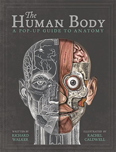 The Human Body: A Pop-Up Guide to Anatomy - Body Walker