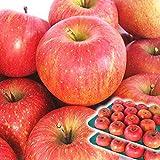 青森県産 りんご 10kg箱 送料無料 クール便 サンふじ ご家庭用