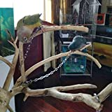 ebamaz Pet Bird Leash Parrot Foot Chain Stainless