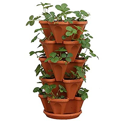 Vertical Herb Garden - 5 Tier Planter Plus 10 Variety of Culinary Herb Seeds - Indoor Herb Garden - Non GMO Basil, Chives, Cilantro, Dill, Lavender, Oregano, Parsley, Rosemary, Sage and Thyme