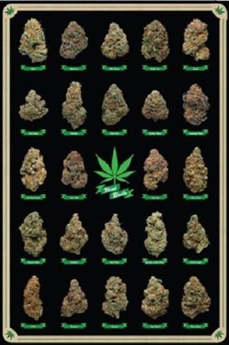 Best Buds Educational Cannabis Marijuana Strains Art Pint Poster