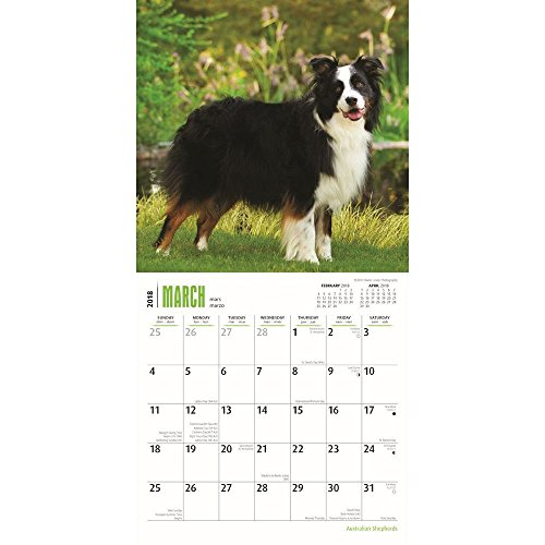 Australian Shepherds 2018 Small Wall Calendar Photo #2