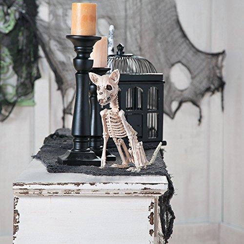 Halloween Skeleton Chihuahua