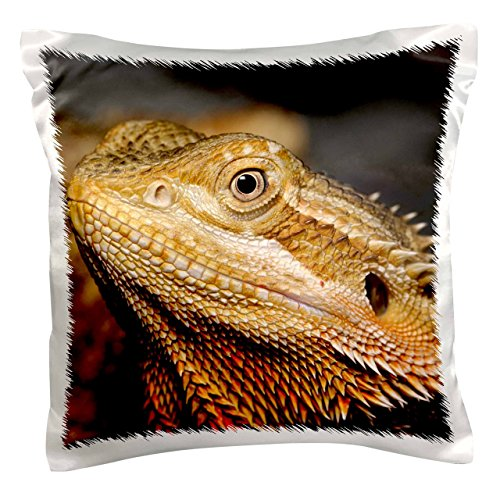 (3dRose pc_83646_1 Bearded Dragon, Pogona vitticeps, Lizard, reptile-NA02 AJE0366-Adam Jones-Pillow Case, 16 by 16