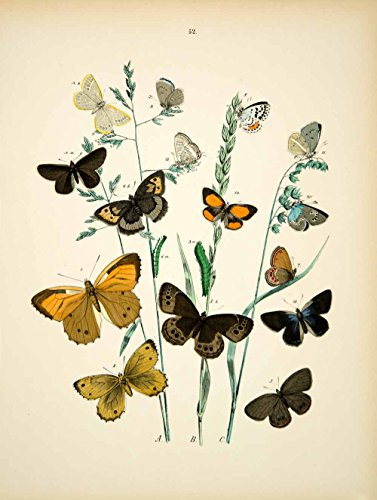 1882 Hand-Colored Lithograph WF Kirby Art Blue Glacier Butterfly Insect Bug EBM1 - Hand-Colored Lithograph (1882 Lithograph)