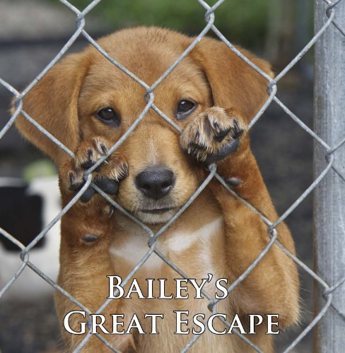 Bailey's Great Escape (A Cute Dog - Retriever 10 Min