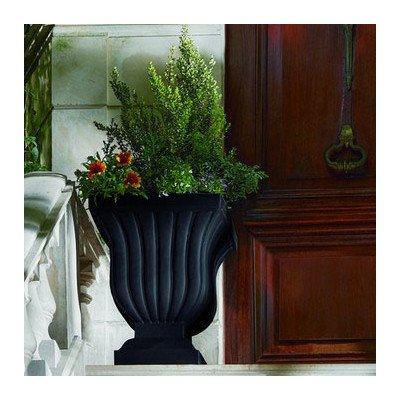 Novelty Urn and Statue Planter Color: Caviar Black by Windowbox