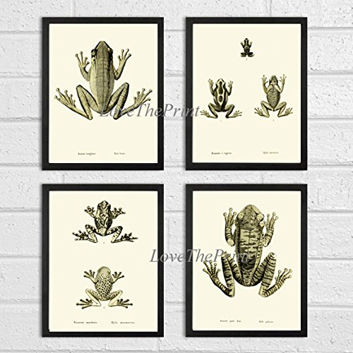 Frog Art Print SET of 4 Beautiful Antique Frogs Lake River Nature Natural Science Illustration Room Wall Home Interior Decor to Frame Unframed ()