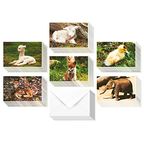 36 Pack All Occasion Cute Baby Animals Design Greeting Cards, 6 Assorted Baby Animal Designs, Bulk Box Set Note Cards Variety Assortment, Envelopes Included, 4 x 6 Inches