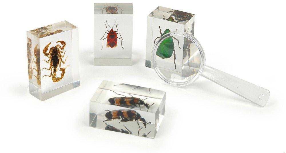 Geoworld ed382 K – Bug 's World Kollektion von 10 echten Insekten