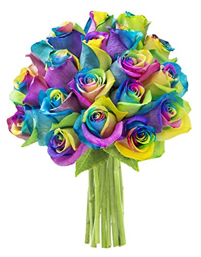 KaBloom Fresh Cut Rainbow Rose Bouquet of 18 Rainbow-Swirl Roses (Farm-Fresh, Long-Stem)