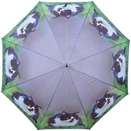 schwarz wei/ße K/ätzchen Motivschirm Katzen Stockschirm AS4HOME Regenschirm