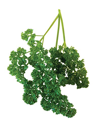 Burpee Double Curled Organic Parsley Seeds 640 seeds ()